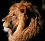 lion_power