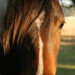 horse_crazy_