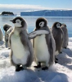 Amigo-Pinguim