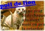 Poil de lion