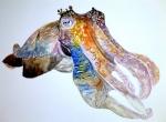 Cuttlethefish
