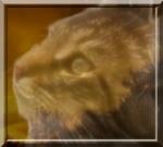 Etoile du Lion