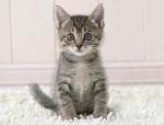 Kittens :3