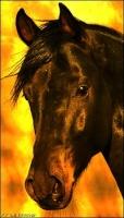 Circus Equestria 1-67