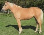 Circus Equestria 2-1