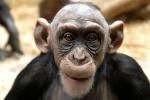 -Primata-
