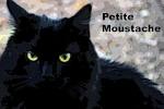 Petite Moustache