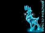 cazador nocturno