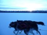 wolf trail