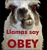 Le Lama des enfers