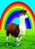 Le Roi des lamas