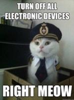 Meow.#