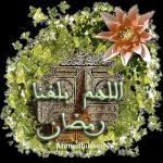 محمود البحيرى