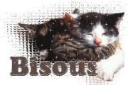 Ilios chat né en septembre 2012  - Page 2 2538842938