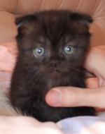 Яшка-котик Мэрьки