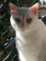 Liloocat