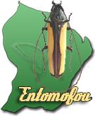 entomofou
