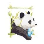 panda62