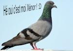 Xénor