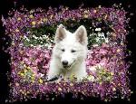 white luna