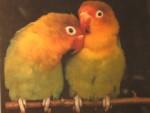 insep.lovebirds