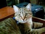 KittyGrl