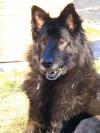 Smilingwolf