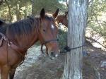 HorseLVR