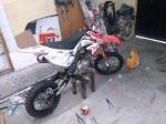 DaniPitbike18