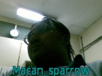 macan_sparrow
