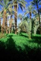 حارس الصحراء