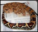 Reptiles/Installations 306-15