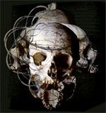 Vos Reproductions/Génétique 313-97