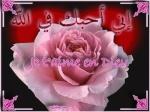 islam's rose