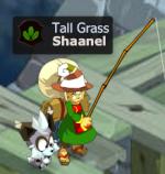 Shaanel