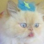 bleachedblackcat