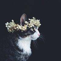 Sam_Svy
