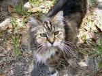 2manycats