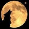 frankwolf