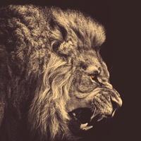 Lionstorm