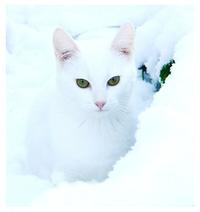 Snowmist