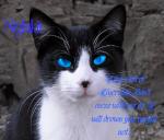 <Nightkit>