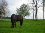 Jockeygirl13
