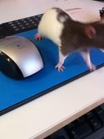 nika_animals