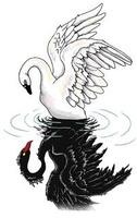 Swan21