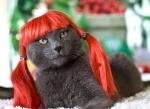 Lola the cat