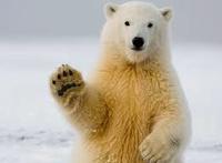 La patte de l'ours