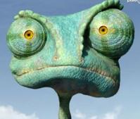 Chamaeleonidaee