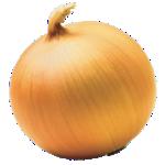 oignon