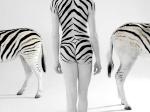zebra35